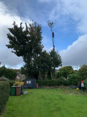 tree services paisley